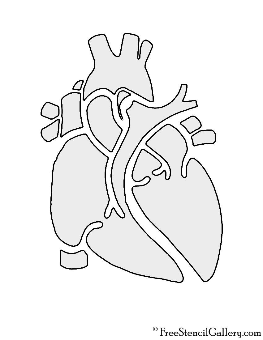 Anatomical Heart Stencil Free Stencil Gallery