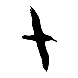 Albatross Silhouette Stencil