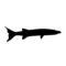 Barracuda Silhouette Stencil