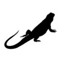 Bearded Dragon Silhouette Stencil