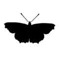 Butterfly Silhouette Stencil