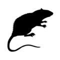 Rat Silhouette Stencil