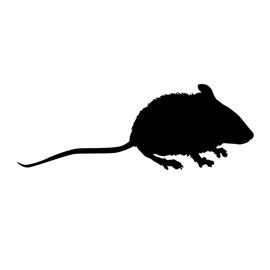 Mouse Silhouette 02 Stencil