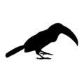 Toucan Silhouette Stencil