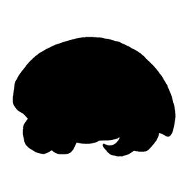 Pokemon – Kabuto Silhouette Stencil