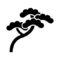 Juniper Bonsai Tree